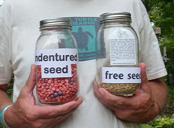 indentured seed free seed