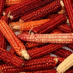 corn-Brown Gravy Manna Flour-square-15CT4711