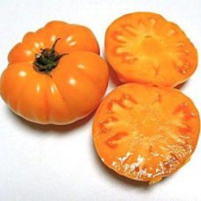 'Loxton Lass' Dwarf Tomato. Photo: Patrina Nuske Small