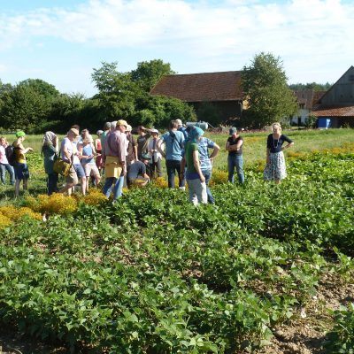Kultursaat variety trials at a farm near Uberlingen